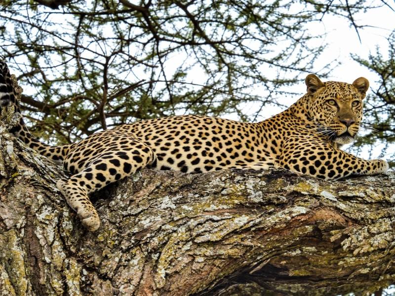 Familiereis Safari in Tanzania