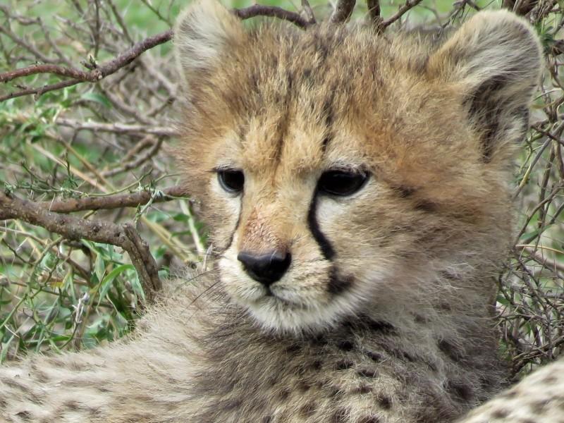 Familiereis Tanzania Zanzibar Safari
