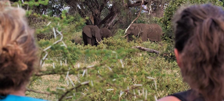 Individuele prive reis naar Tanzania