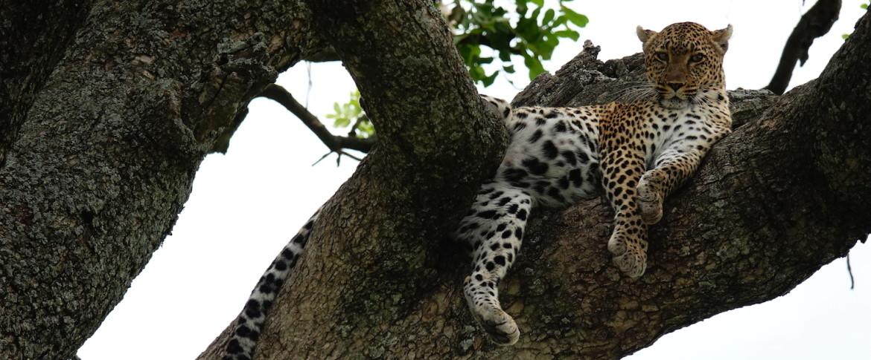 Kosten Safari Tanzania beleving meer dan waard