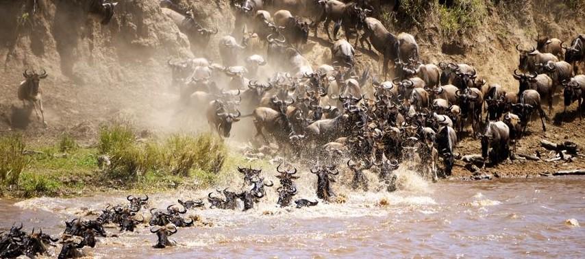 Tanzania Migratie Serengeti