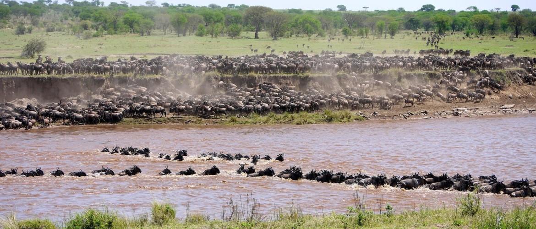 De Serengeti Migratie in Tanzania