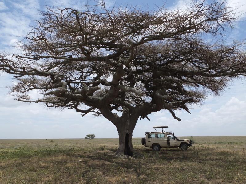 Safari Tanzania Serengeti Migratie Jeep