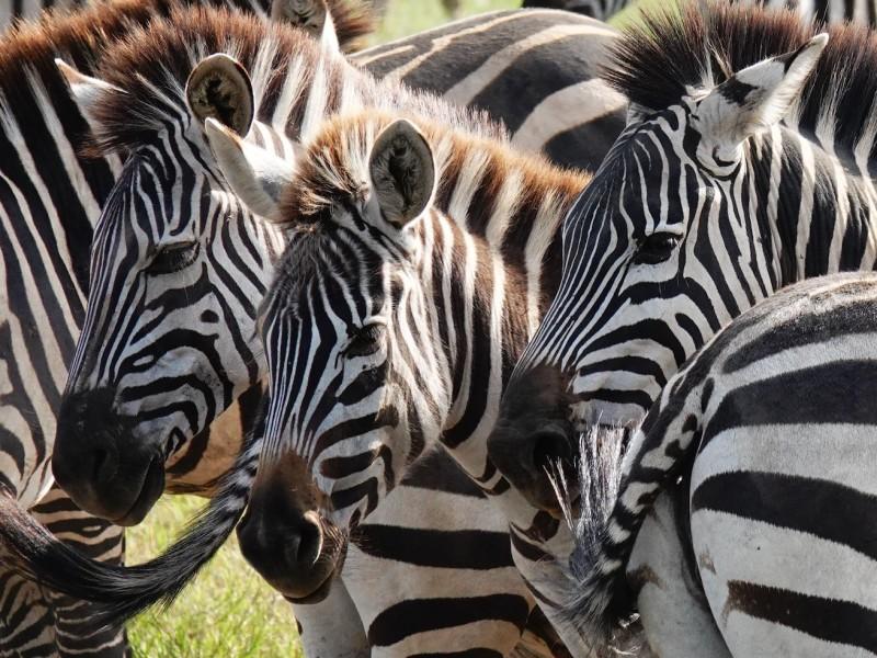 Safari Tanzania Serengeti Migratie