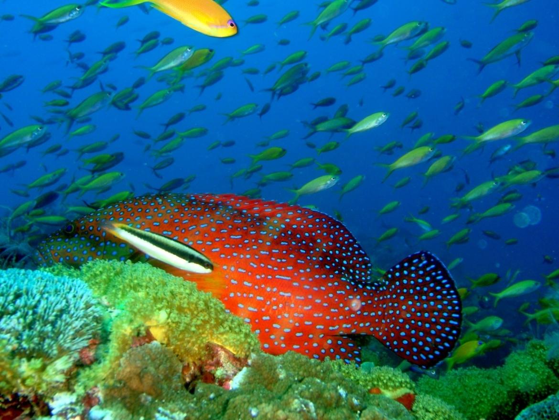 vissen en koraal pemba island
