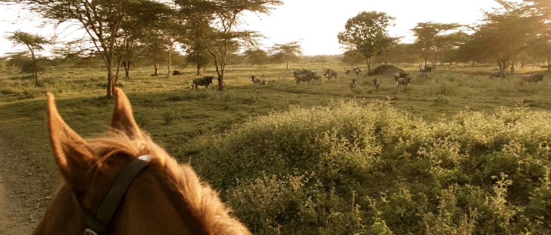 Te paard door de bush in Tanzania | Paardrijden in Tanzania