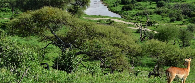 Een Tanzania Safari in het regenseizoen April/Mei