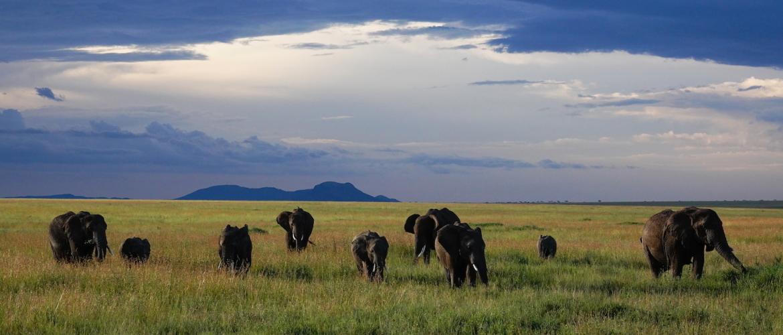 Safari vakantie Tanzania | Waarom naar Tanzania?