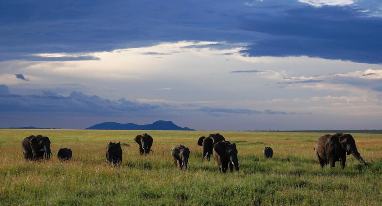 Regenseizoen Safari Tanzania