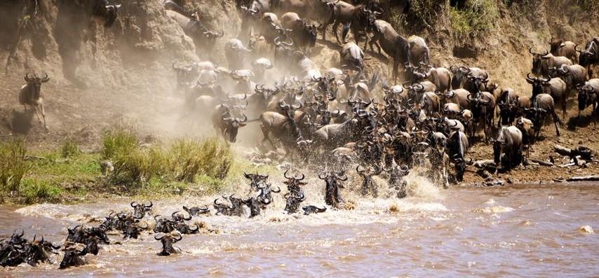 Rivieroversteek migratie Serengeti