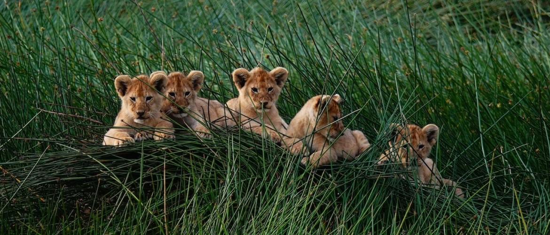 Een safari reis Tanzania boeken in 10 stappen