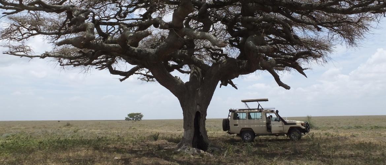 5 Tips voor de ultieme safari beleving in Tanzania
