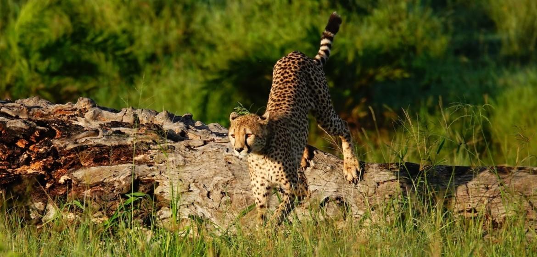 Serengeti Park Tanzania Safari Vakantie