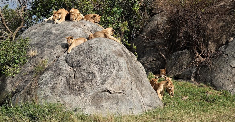 Serengeti Rondreis Safari Tanzania