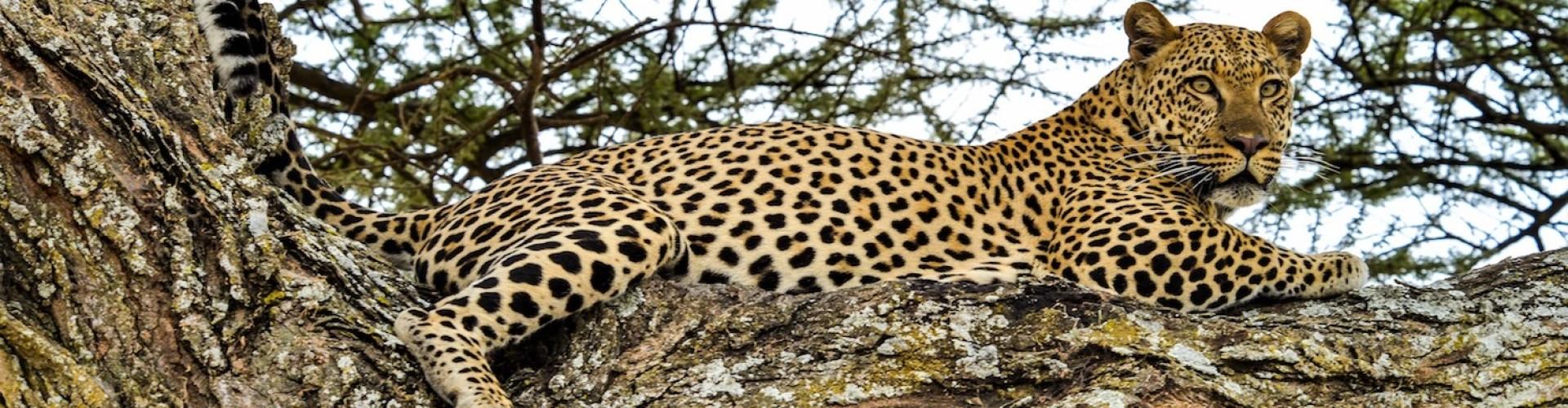 Tanzania Afrika Vakantie