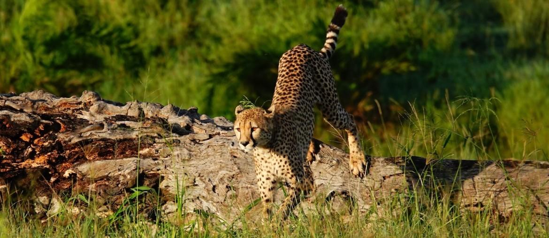 Tanzania safari beleving