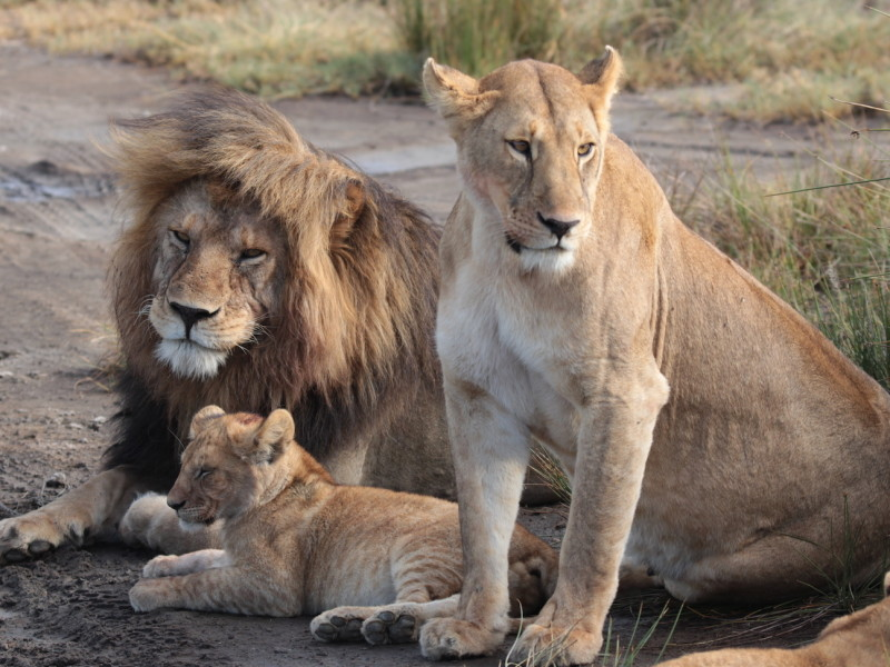 Tanzania Safari Serengeti rondreis