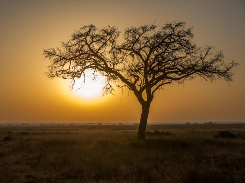 Tanzania Safari Vakantie Zonsondergang Afrika