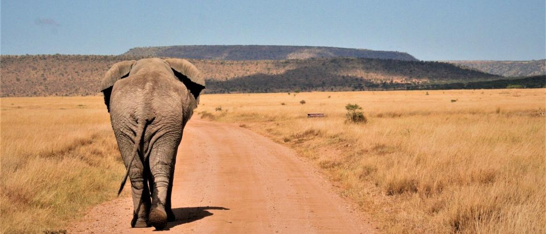 Tanzania vakantie boeken? De 8 tips van Makasa...