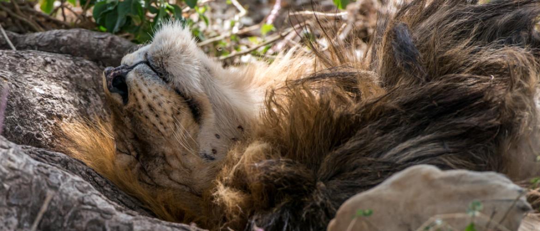 8 tips om goedkoop op safari te gaan | Budget Safari op maat Tanzania