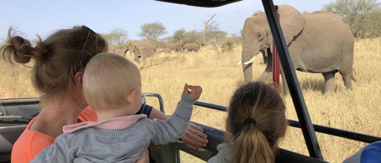 Hoe ziet een typische safari dag eruit?