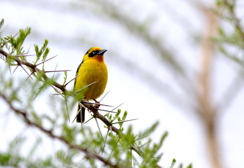 vogels in Tanzania