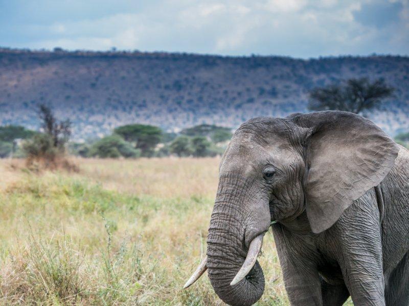 Safari olifanten zien