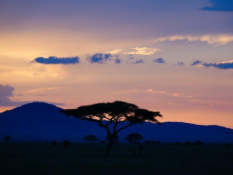 Savanna's in Tanzania