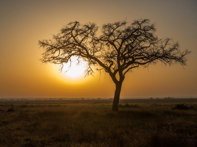 Zonsondergang op Safari in Tanzania