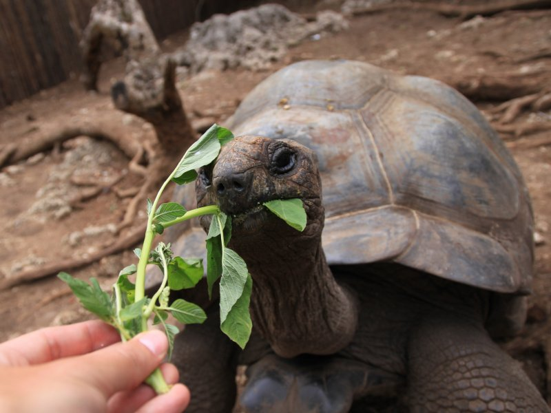 Schildpadden zoeken Zanzibar