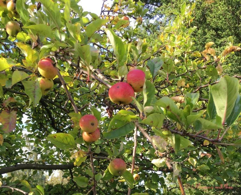 Appelboom cadeau