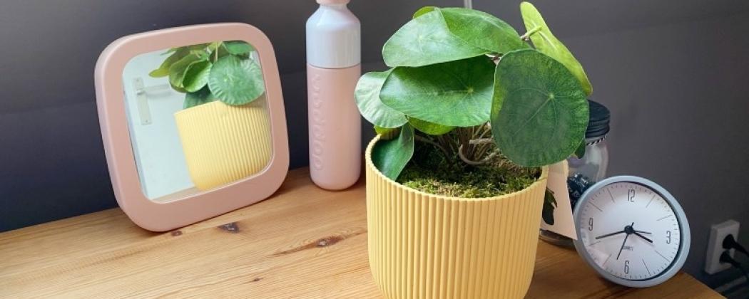 Planten op de slaapkamer