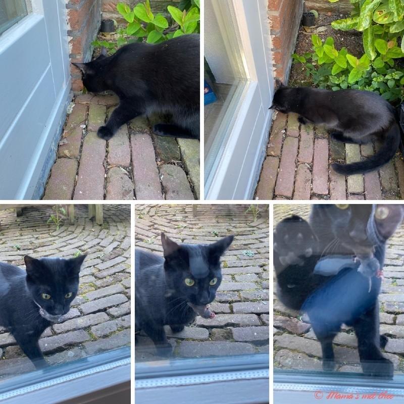 Kat speelt met muizen
