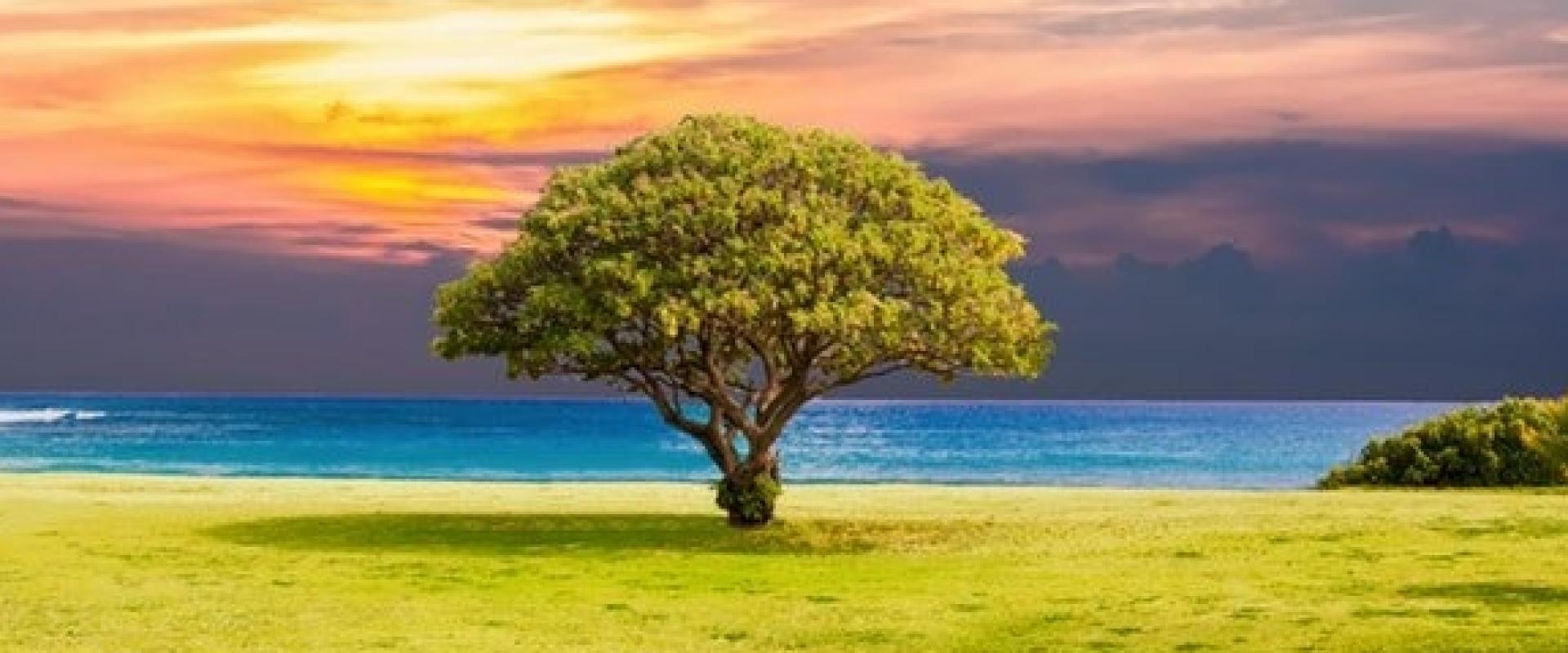 Bomen zijn relaxed...