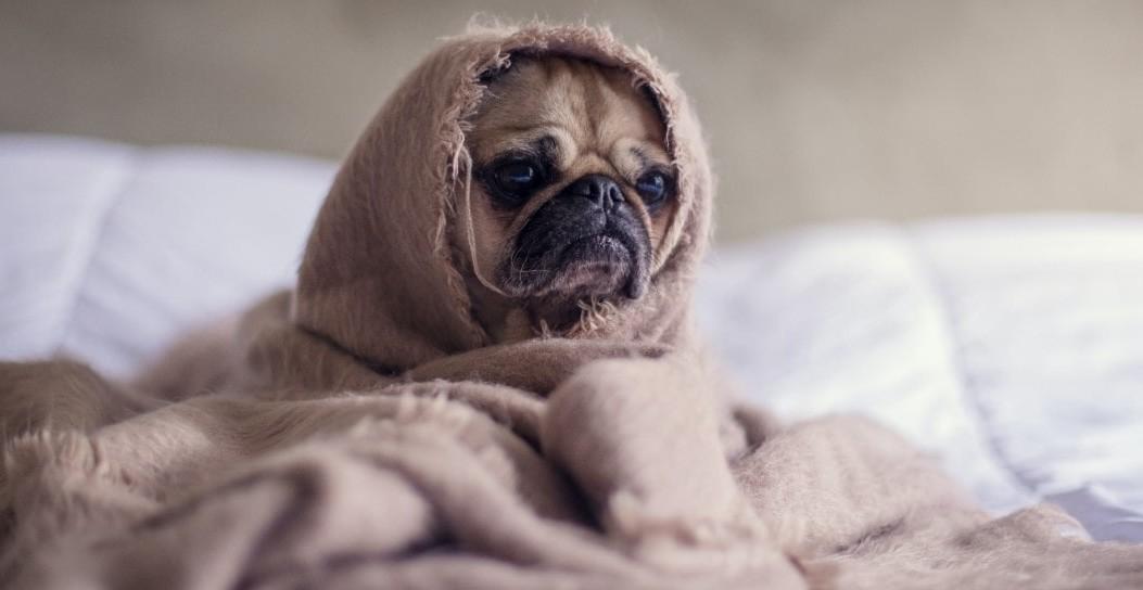 controle-loslaten-zielige-hond-credits-unsplash-matthew-henry