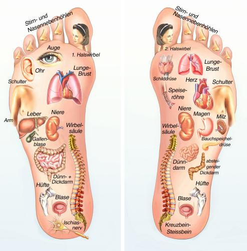 voetreflex cursus