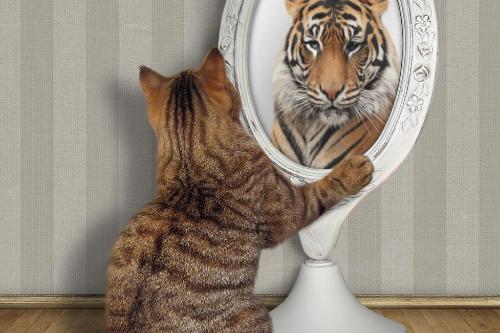 hoe krijg ik meer zelfvertrouwen