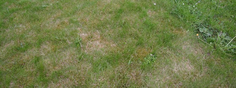 kale-plekken-in-gazon-wateroverlast-waterprobleem