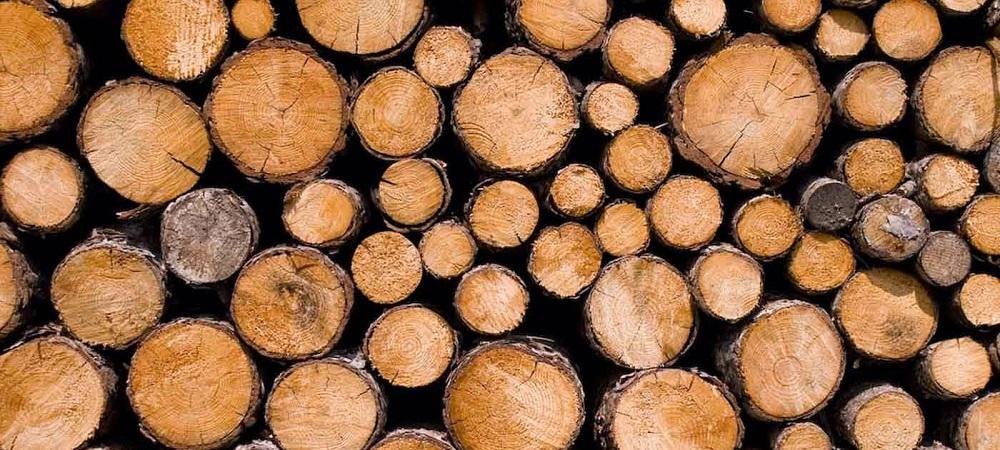 Douglas hout | Lariks douglas