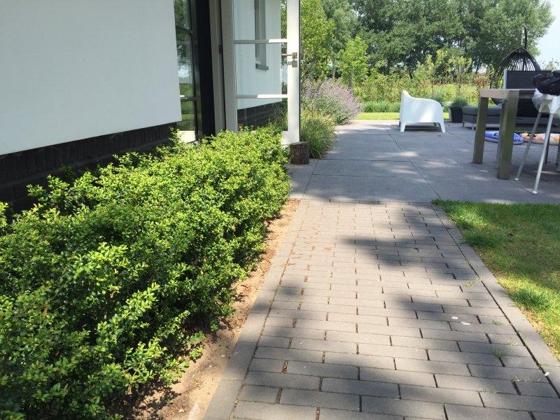 Wandelpad langs moderne villa met buxushaag
