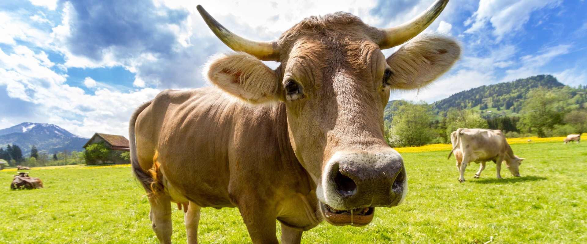 Hoe wordt leer gewonnen: van koe 🐮 tot tas 👜
