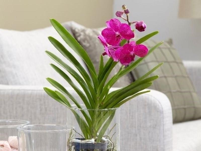 Plant wholesale plant supplier