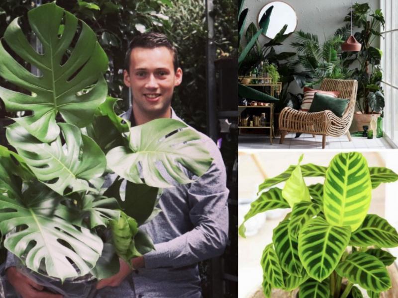 Houseplants Monstera Houseplants catalogue Micquel Groen, Green Inspiration