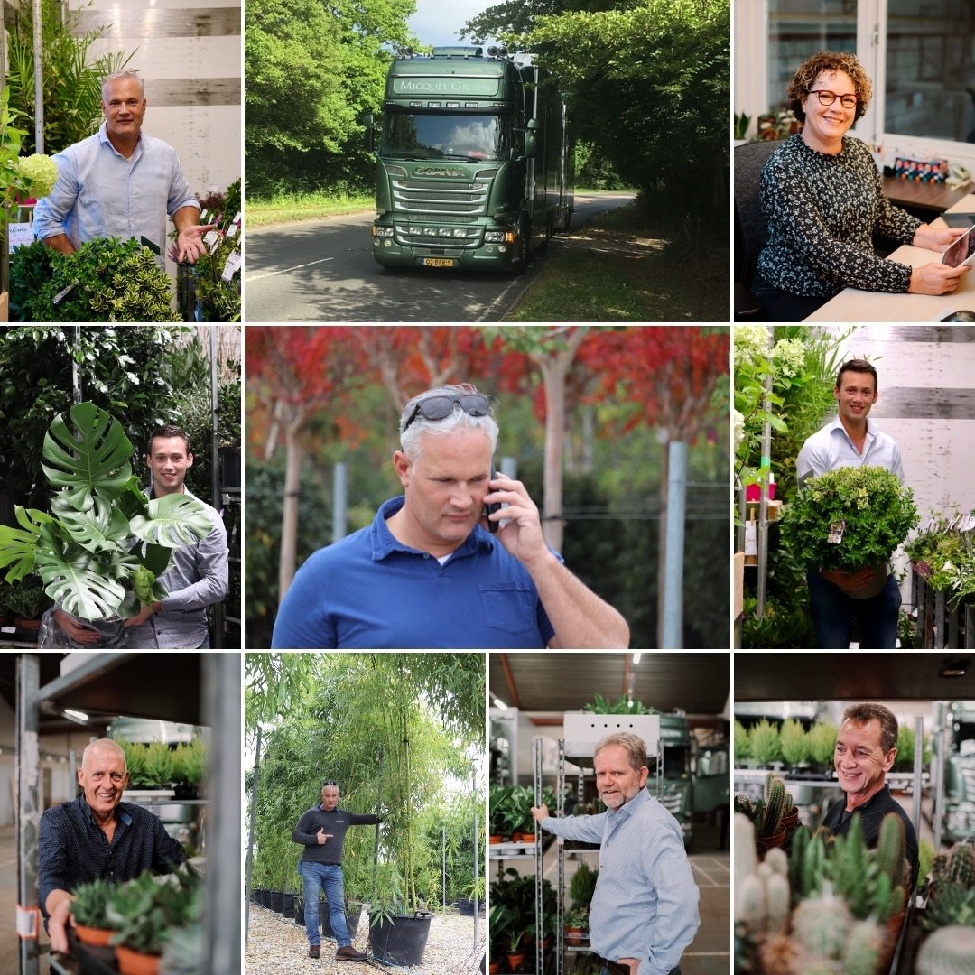 Supplier of quality house and garden plants to United Kingdom garden centres.
