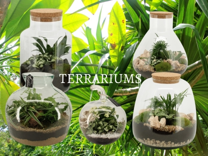 Terrariums plants in several sizes available at the webshop of Micquel Groen.