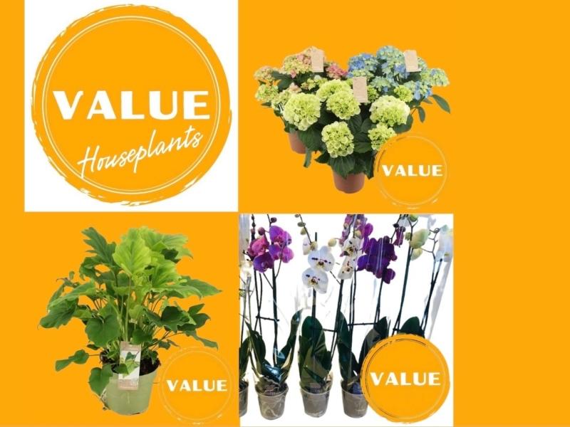 Micquel Groen, Green Inspiration Value Houseplants.