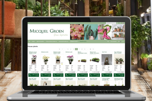 House plants at the webshop of Micquel Groen.
