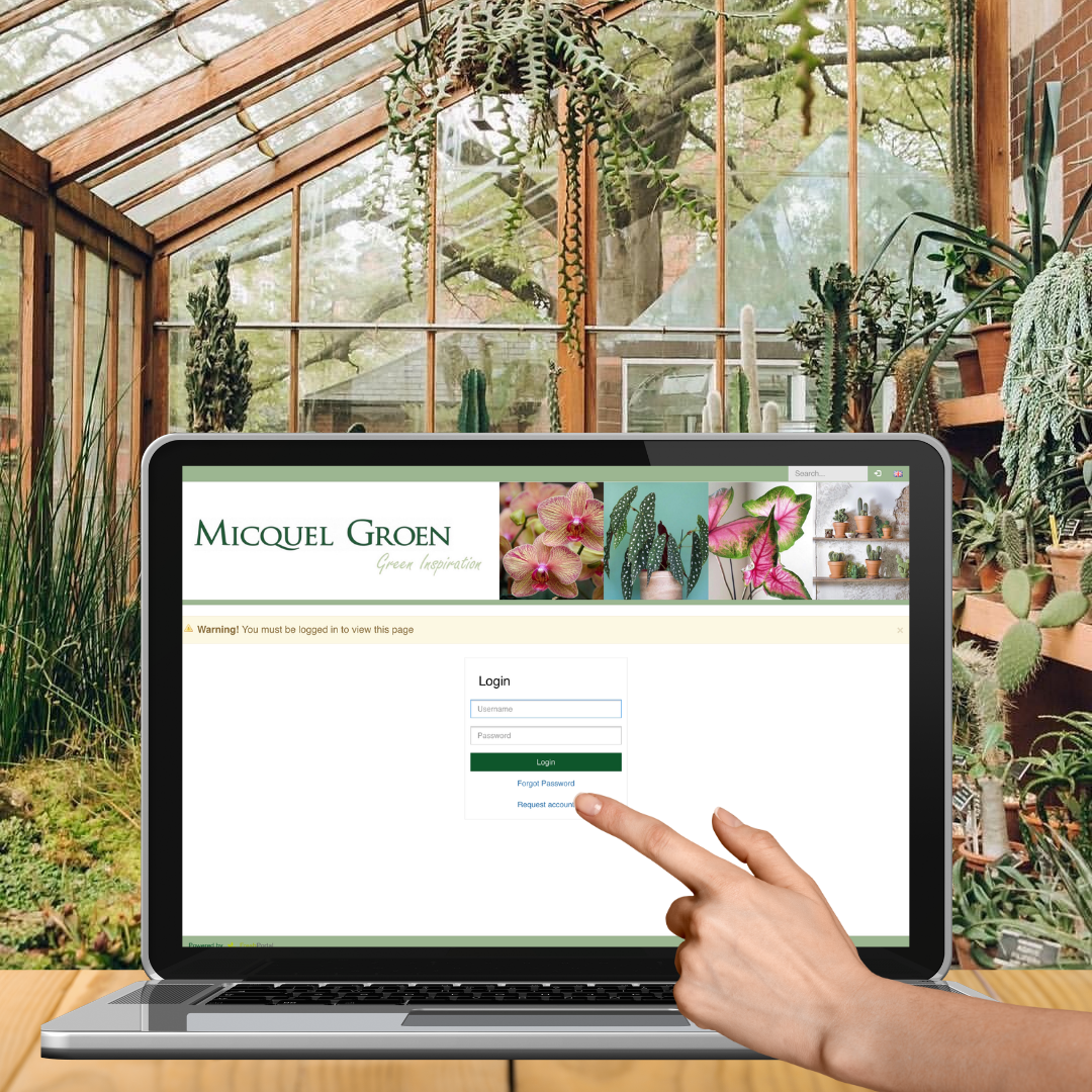 Webshop Micquel Groen login first visit request account.