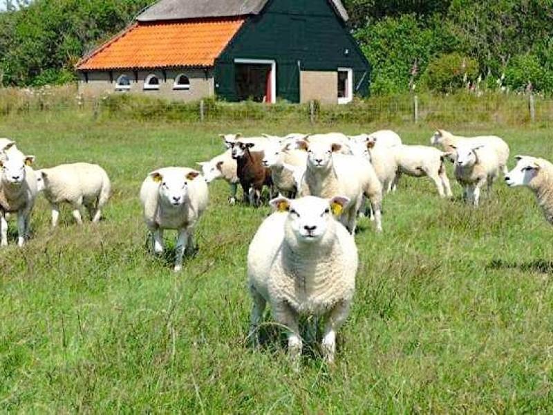 Landal Sluftervallei nr 34 MijnVakantiehuisJouwVakantiehuis.nl