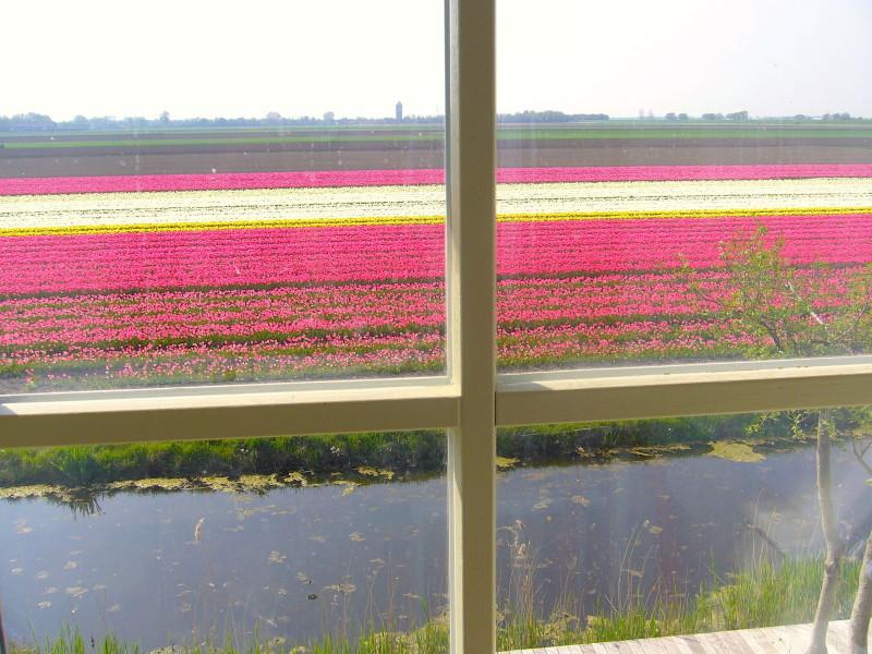 roos uitzicht Appartementenboerderijnieuwesluis